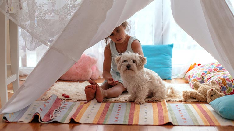 Girl playing tent with her dog in the living room.