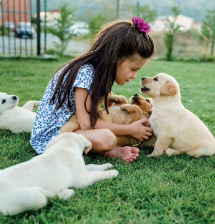 girl sitting on grass surrounded by puppies